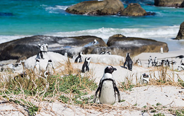 Peninsula Tours in Cape Town