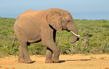 Safari Tours with Elephants close to Cape Town