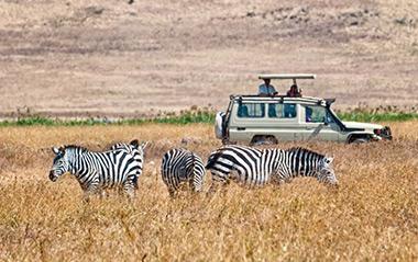 Safari Day Tours close to Cape Town
