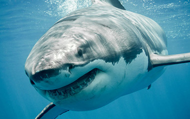Shark Cage Diving Tour